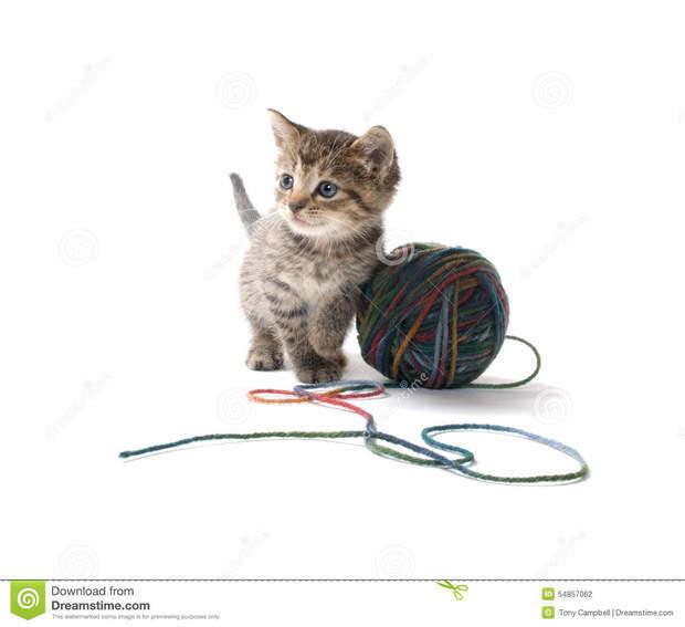 小猫玩球图片_小猫玩毛线球的场景_360问答